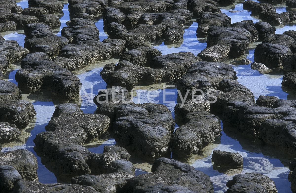 stromatolitter