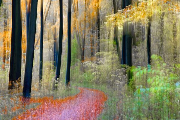 Bevægelse-i-efterårsskoven