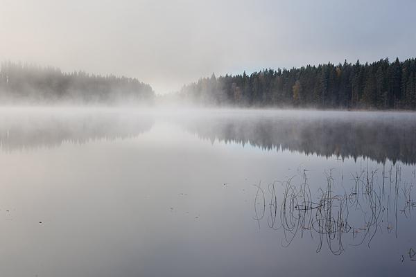 Svensk-skovsø
